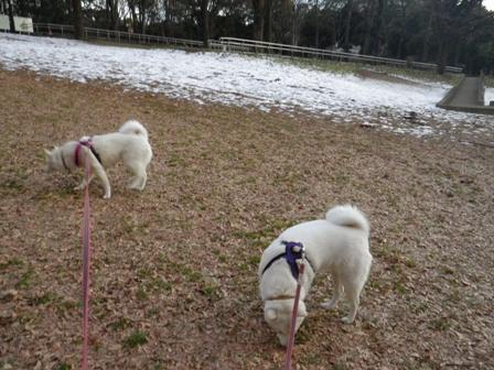 2012.1.25今日の雪4