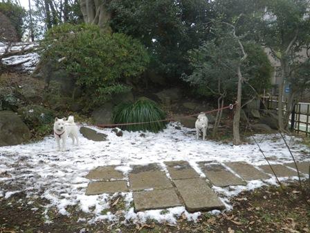 2012.1.27今日の雪