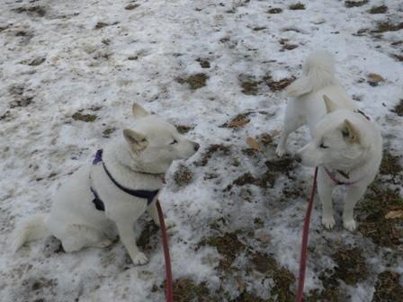 2012.1.27かろうじて残った雪の上で