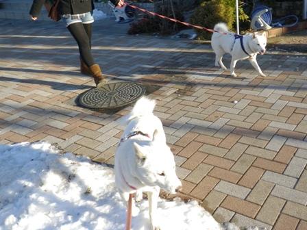 2012.1.30お散歩
