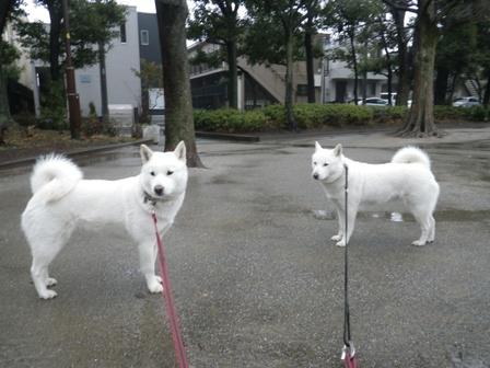 2012.2.7公園を歩こう