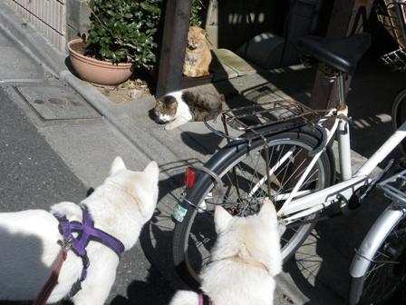 2012.2.11ネコちゃんの日向ぼっこ
