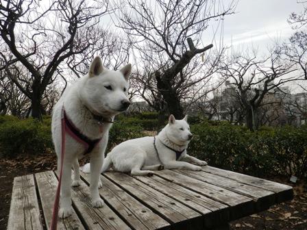 2012.2.13梅林の中で休憩