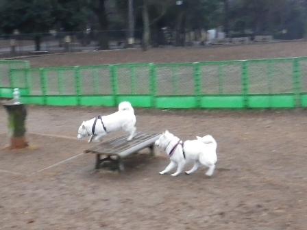 2012.2.14芦花公園1