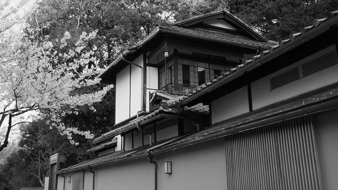 日本家屋と桜
