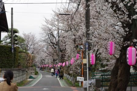 桜微妙咲き