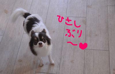 130208-azuki2.jpg