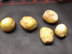 手羽先と里芋の炒め煮09