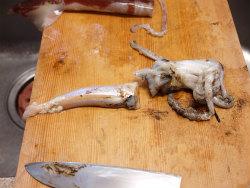いかと里芋の煮物14