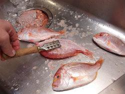 連子鯛煮付け06