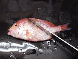 連子鯛煮付け10
