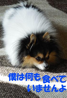 DSCN2607_20121223194108.jpg