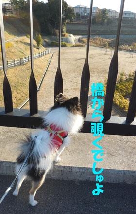 DSCN3061_20121230192307.jpg