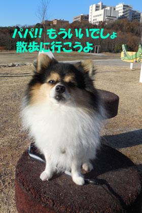 DSCN3770_20121230192449.jpg