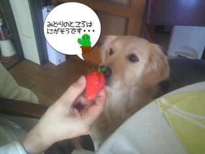 緑のとこは食べられません・・・