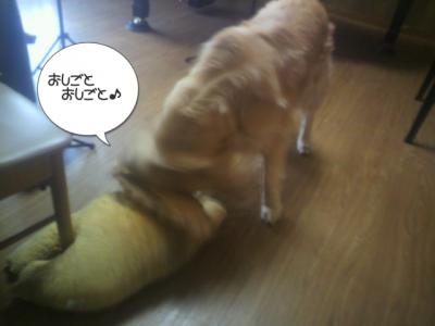 さすが看板犬です