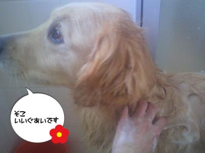 お風呂入って良かったでしょ?