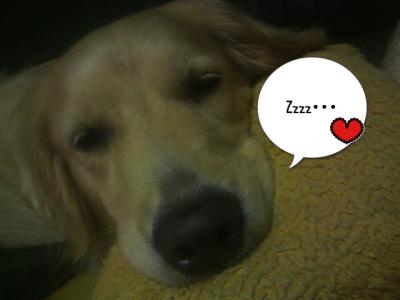 おやすみ・・・