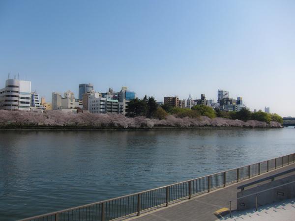 20130330_sakura02.jpg