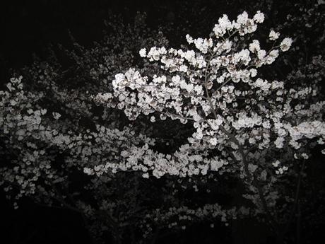 IMG_13942012_easter_kashiwa_easterkashiwa.jpg