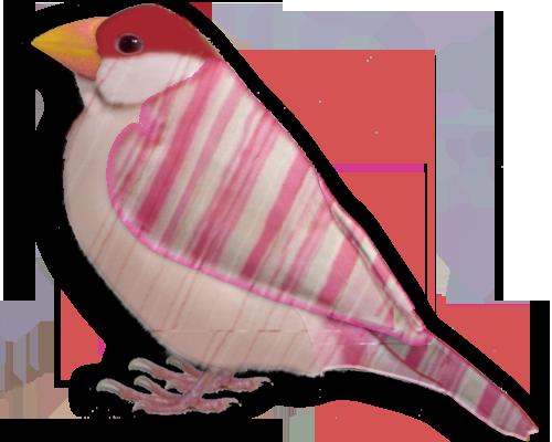 ピンクストライプ文鳥