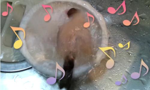 ちゃちゃの水浴び_2.jpg