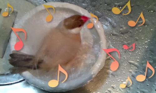 ちゃちゃの水浴び_1.jpg