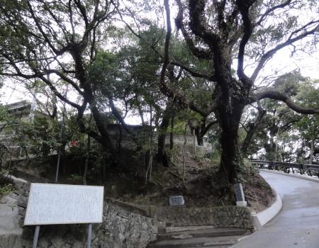 ウバメガシと堂崎観音5