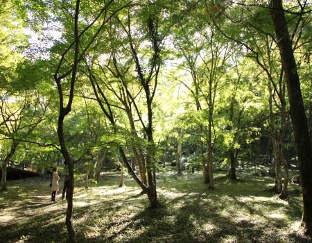 稲荷山公園4