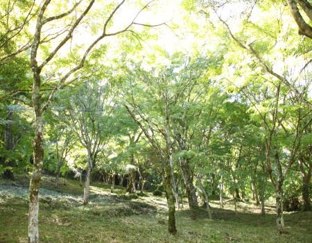 稲荷山公園5
