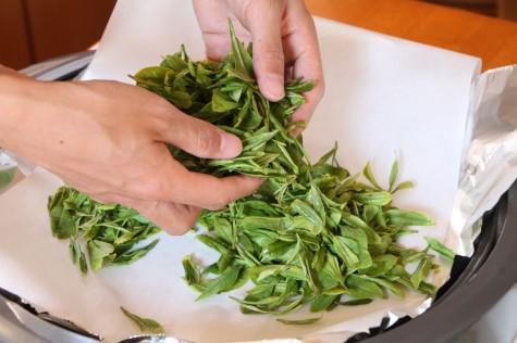 茶葉を揉む1
