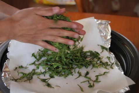 茶葉を揉む3