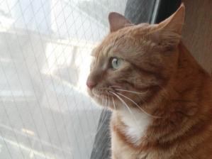 cat mit