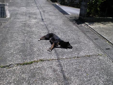 犬_宮古島