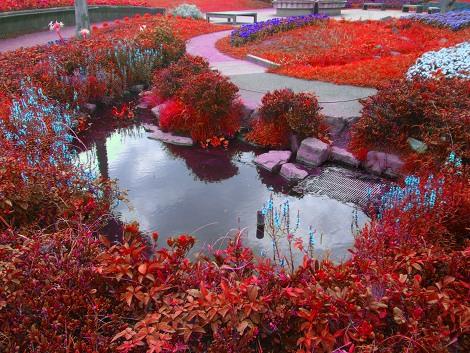 辻堂海浜公園の庭園