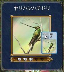 ヤリハシハチドリ