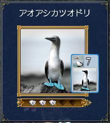 アオアシカツオドリ