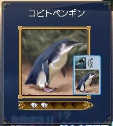 コビトペンギン