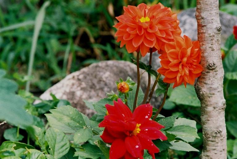 香勝寺の赤い花