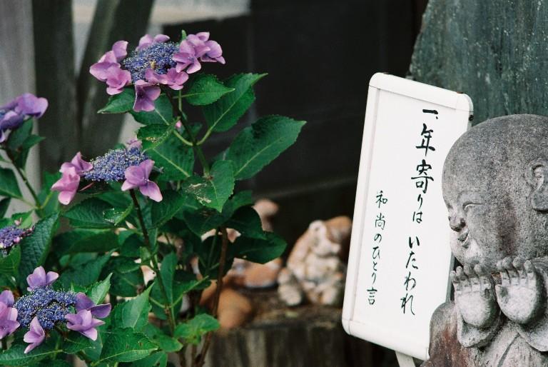 香勝寺のあじさい-022f3