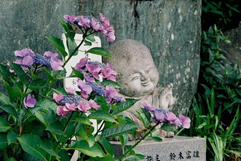 香勝寺のあじさい-2