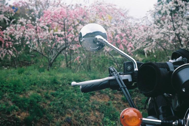 引佐町しだれ桃のベンネビル-2
