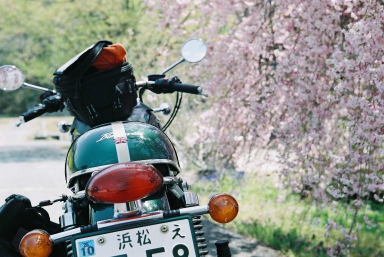 枝垂れ桜とボンネビル-1