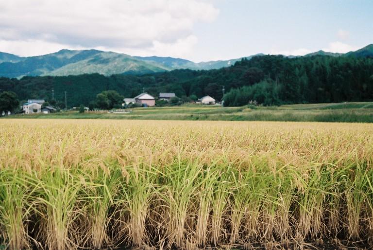 秋、米どころ