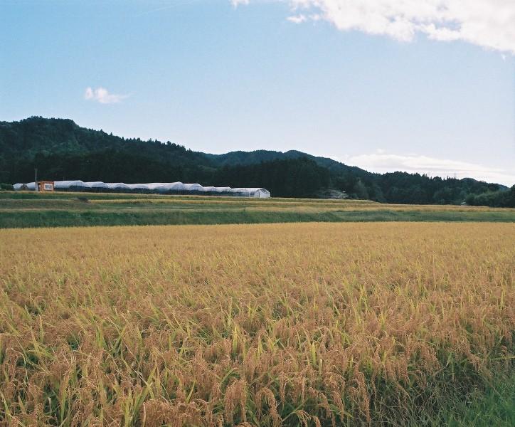 岩村町 実りの秋-1