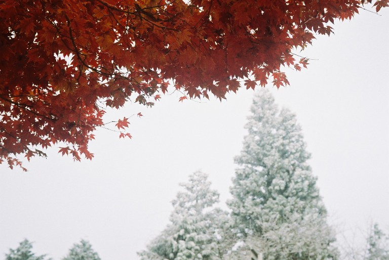 紅葉と樹氷-1