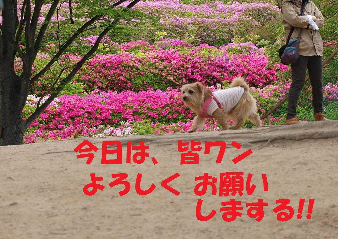 hiroshima0ff.jpg
