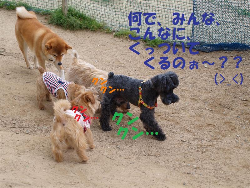 hiroshimaoff2.jpg