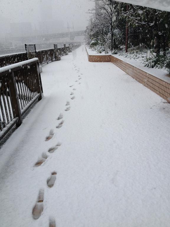 snow113.jpg