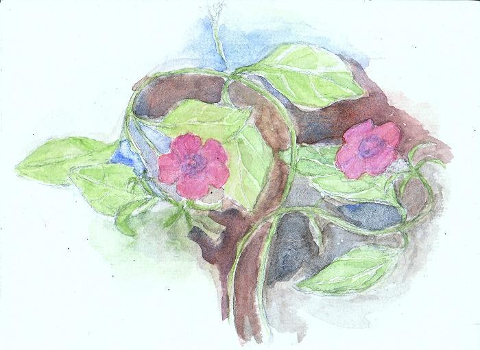 flower-blo.jpg